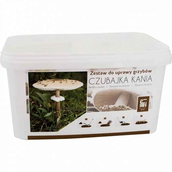 grzybnia Kani do amatorskiej uprawy
