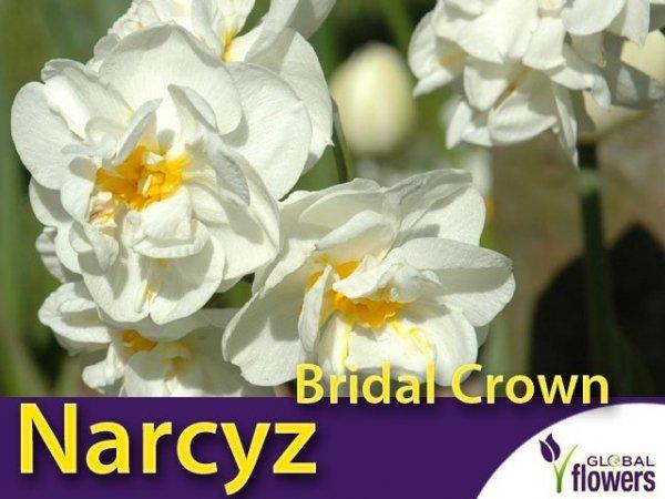 Narcyz pełny wielokwiatowy 'Bridal Crown'