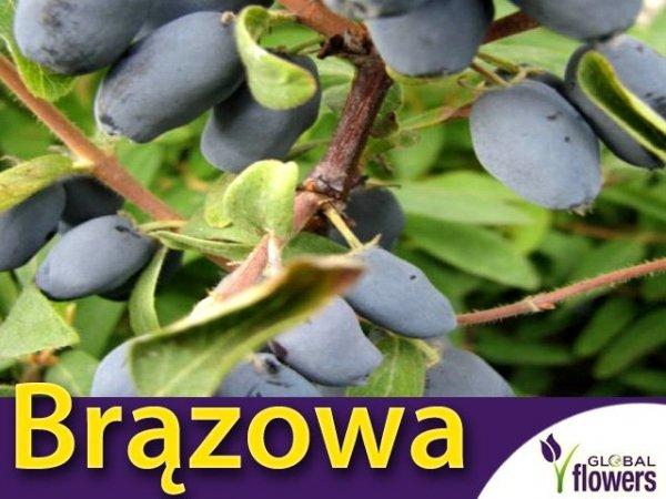 Jagoda Kamczacka Sadzonka - odmiana Brązowa