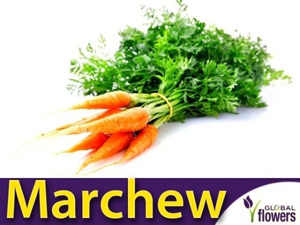 Marchew Flakkese2 Późna (Daucus carota) 4g + 1 g