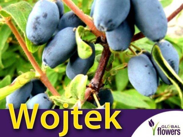 Jagoda Kamczacka Sadzonka - odmiana Wojtek