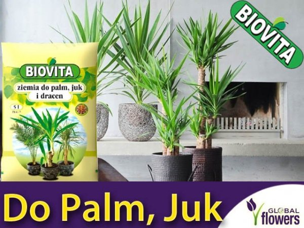 Ziemia do palm, juk i dracen 5L