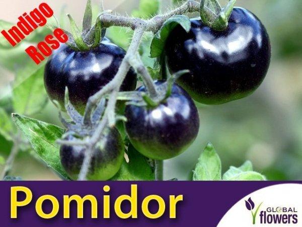 Pomidor Indigo Rose (Lycopersicon Esculentum)