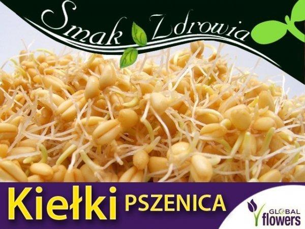 Nasiona na Kiełki - Pszenica - (Triticum L.) 50 g