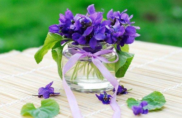 Fiołek Wonny Fioletowy (Viola odorata) 0,3g