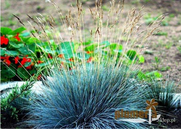 rośliny na skalniak