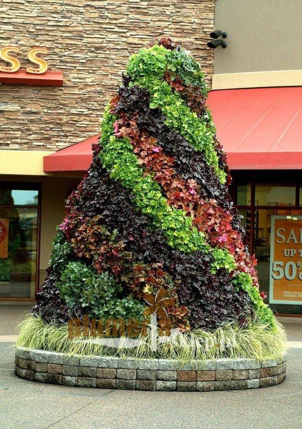 żurawka o czarnych liściach