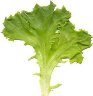 Baby Leaf  (Lactuca sativa) Sałata liściowa Lollo Bionda 1,5g