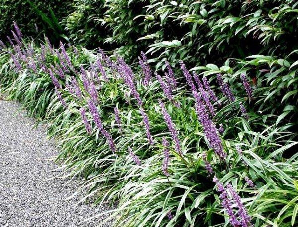 Piękna roślina na rabaty kwiatowe