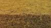 Materac Lux PRESTIGE Line trójwarstwowy (Konstrukcja 3W) KOKOS-PIANKA-KOKOS  120/60/11,5 cm FIKI MIKI
