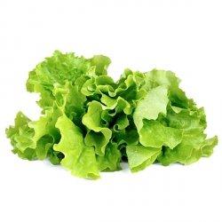 Kapsułki roślinne 3-pak Sałata