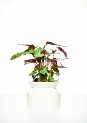 doniczka ceramiczna Boskke Spool Planter biała