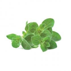 Kapsułki roślinne 3-pak Oregano
