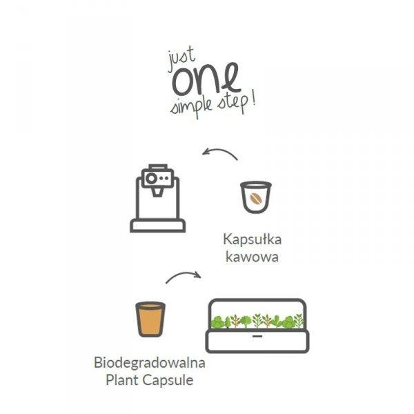Click and Grow to kapsułki z roślinkami i wszystkim, czego roślinka potrzebuje do wzrostu