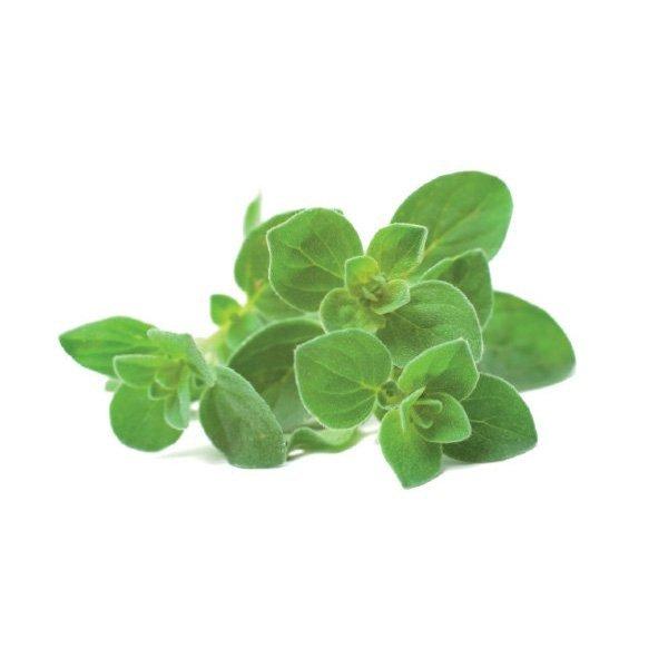 Aromatyczne zioło oregano to idealny dodatek do każdej kuchni