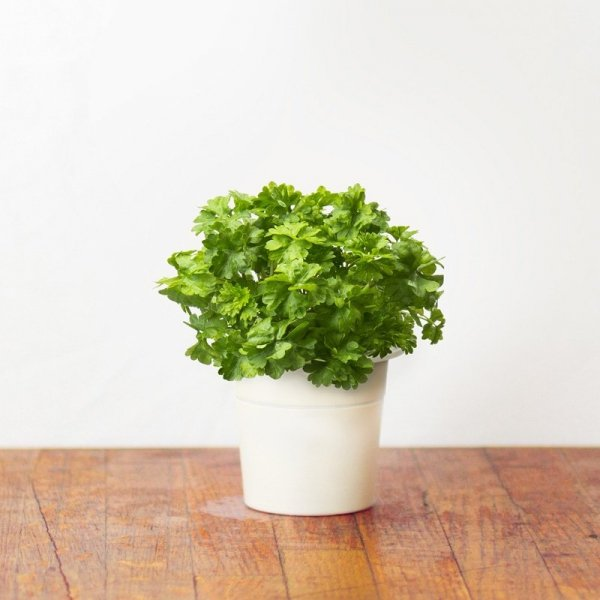 Kapsułki roślinne 3-pak Pietruszka Click and Grow
