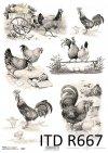 Wielkanoc, wiosna, kura, kury, kogut, koguty
