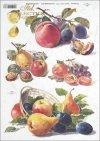 Plum, plums, apple, apples, pear, pears, lemon, lemons, lemon, fruit, R397