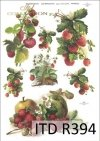 truskawka, truskawki, owoce truskawek, krzaki truskawek, truskawkowy, owoce, R394