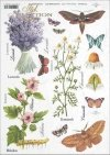 meadow, plants, butterfly, butterflies, chamomile, hibiscus, lavender, flower, flowers, herbs, herbs, R404