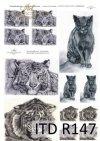 painting-cat-cats-tiger-tigers-animals-artist-painter-Klaudia-Bezak-R0147
