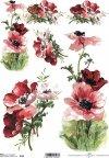 flower, flowers, poppies, field poppies, dark maroon, velvet poppies, meadow, garden, R564