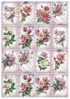 Papiery do scrapbookingu w zestawach - Piękne róże * Papiere für Scrapbooking in Sätzen - Schöne Rosen