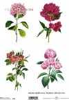 rice-paper-decoupage-flowers-meadow-garden-Krystyna-Jałochowska-R0123