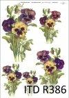 bratek, bratki, bratek ogrodowy, fiołek ogrodowy, kwiat, kwiaty, kwiatek, kwiatki, R386