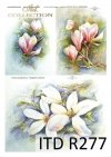 magnolia, magnolie, kwiat magnolii, kwiaty, kwiat, Magdalena Rochoń, R277