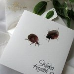 Invitations / Wedding Invitation 01731_44_ladybugs