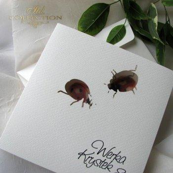 Einladungskarten / Hochzeitskarte 1731_44_Marienkäfer
