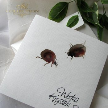 Invitations / Wedding Invitation 1731_44_ladybugs