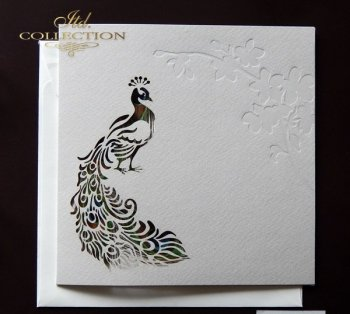 Invitations / Wedding Invitation 1724_99_peacock