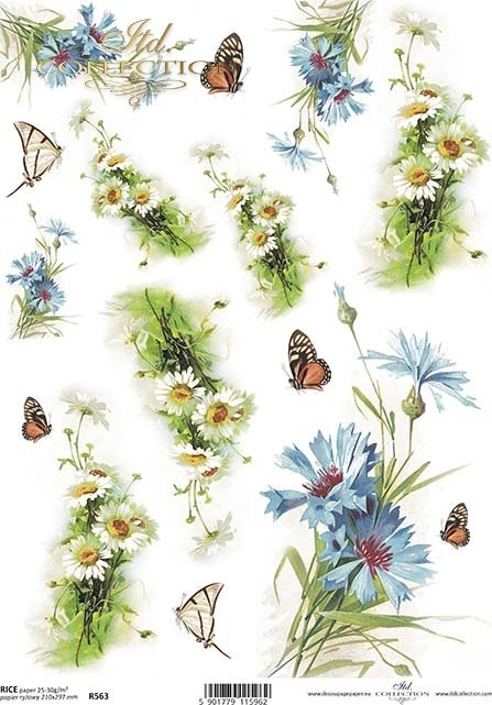 cornflower, marigold, butterfly, cornflowers, marigolds, butterflies, flower, flowers, leaf, leaves, flower petals, spring, R563