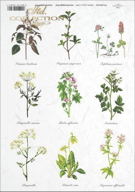 uchnia, spices, herbs, herbs, herbarium, herbarium, basil, oregano, marjoram, clover, wild slime, R402
