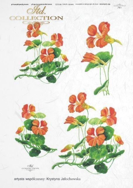 papier-ryżowy-decoupage-kwiaty-ogród-nasturcje-Krystyna-Jałochowska-R0125