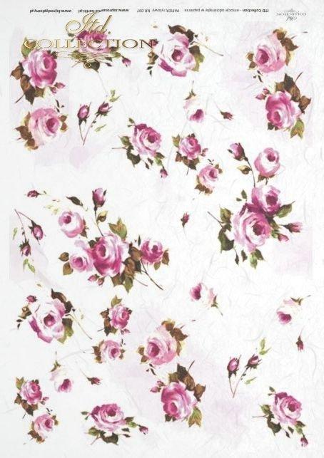 róża, róże, flower, flowers, rose, roses, garden, R097