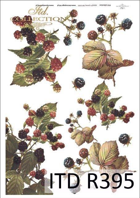 jeżyna, jeżyny, owoce jeżyn, krzaki jeżyn, jeżynowy, owoce, R395