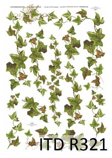 bluszcz, bluszcz pospolity, liście, krzewy, rośliny, R321