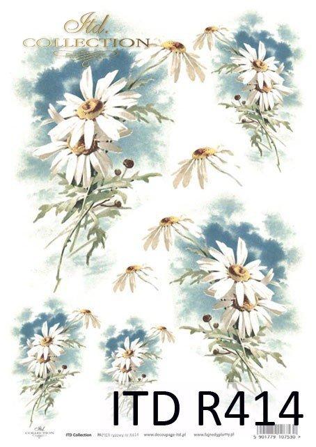 kwiat, kwiaty, kwiatek, kwiatki, listki, liście, płatki kwiatów, margerytka, margerytki, wiosna, R414
