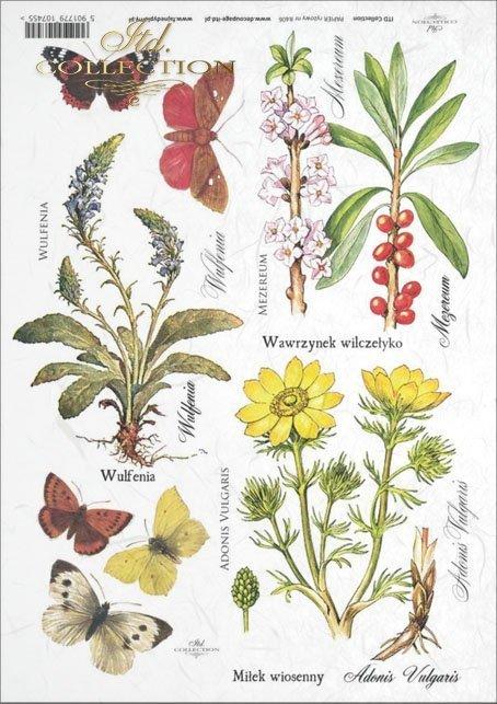 herbs, Wulfenia, Adonis Vulgaris, Daphne mezereum, meadow, plants, butterfly, butterflies, flower, flowers, R406