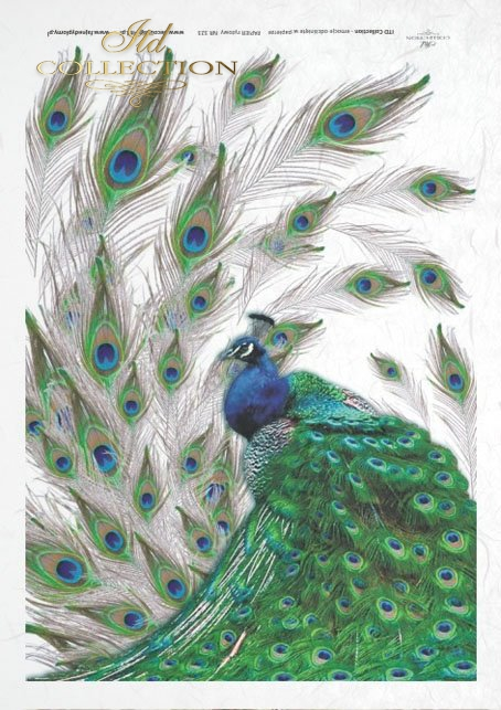 peacock, peacocks, peacock tail, peacock eyes, tren, feathers