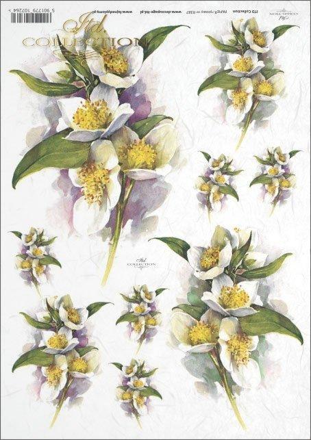 Jasmine, flower, flowers, R387