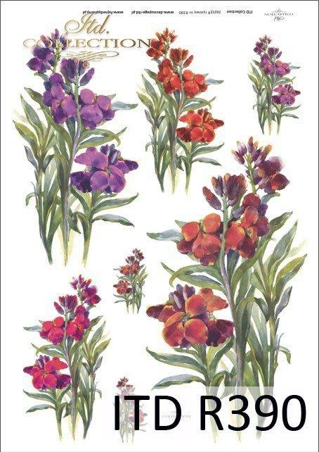 lewkonia, lewkonie, kwiat, kwiaty, kwiatek, kwiatki, bukiet, bukiety, R390