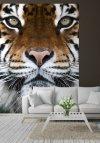Fototapeta na ścianę - Tygrys - 183x254 cm - decoart24.pl