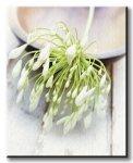 Obraz na płótnie - White Still Life I - 50x40 cm