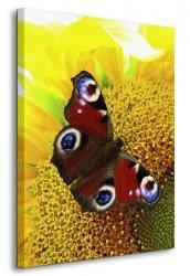 Obraz na płótnie - Motyl - 120x90 cm