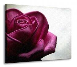 Obraz na ścienę - Smutna róża - 120x90 cm