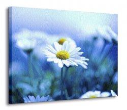 Obraz na płótnie - Margaretki - Kwiaty - 120x90 cm